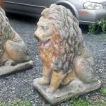 lions1-