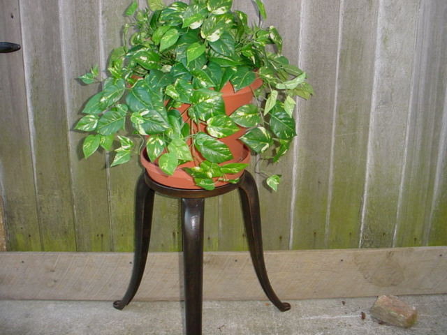 Plant stands Image
